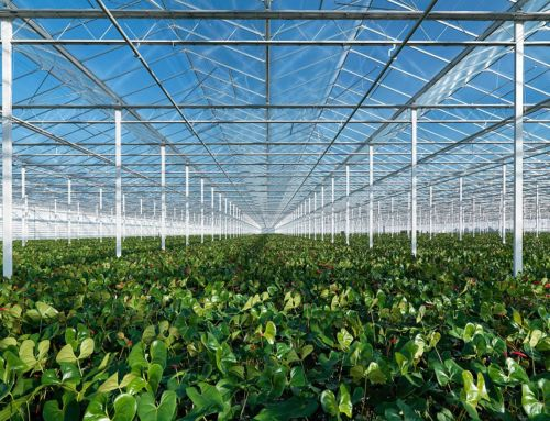 How the Netherlands has innovated agriculture to become the world's #2 exporter of food