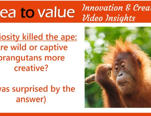 Curiosity killed the ape: are wild or captive orangutans more creative?