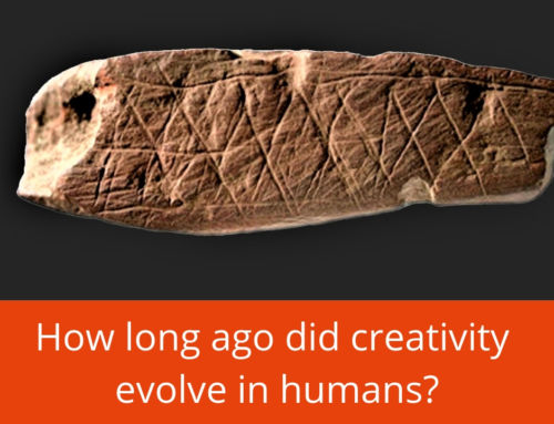 How long ago did creativity evolve in humans?