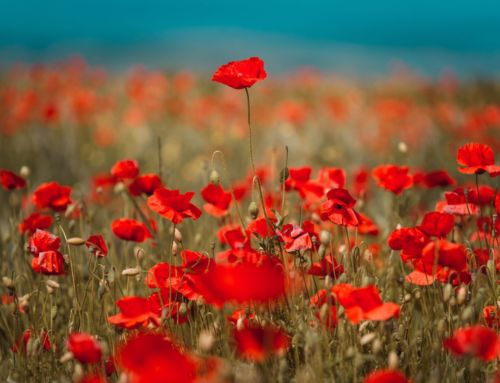 Tall Poppy syndrome vs Tall Weed syndrome